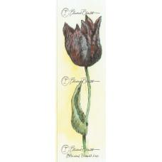 Tulp paars