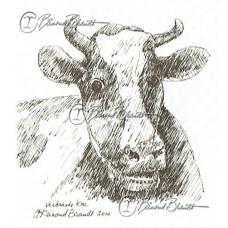 Verbaasde koe